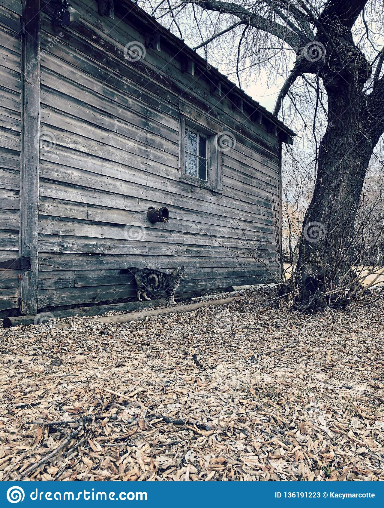 Le chat de grange et la grange