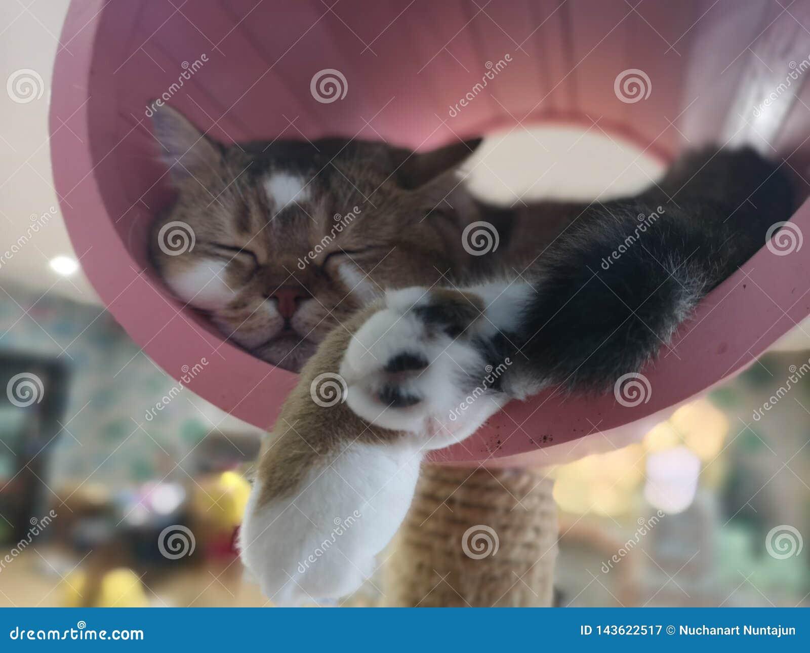 Le chat doit fixer et détente