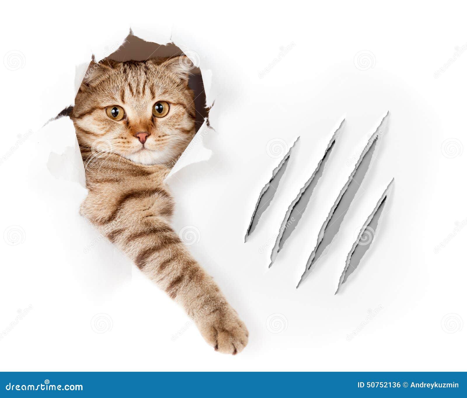 le chat dr le en trou de papier peint avec la griffe raye photo stock image 50752136. Black Bedroom Furniture Sets. Home Design Ideas