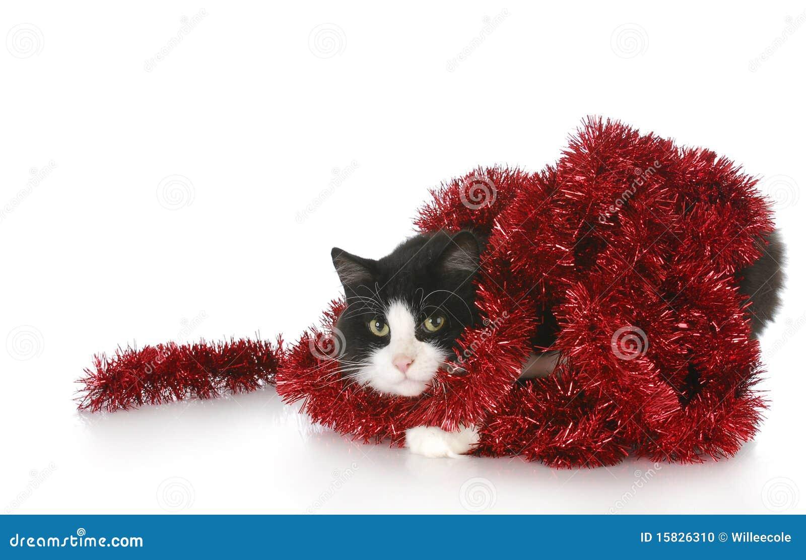 Le chat a embrouillé dans la guirlande rouge