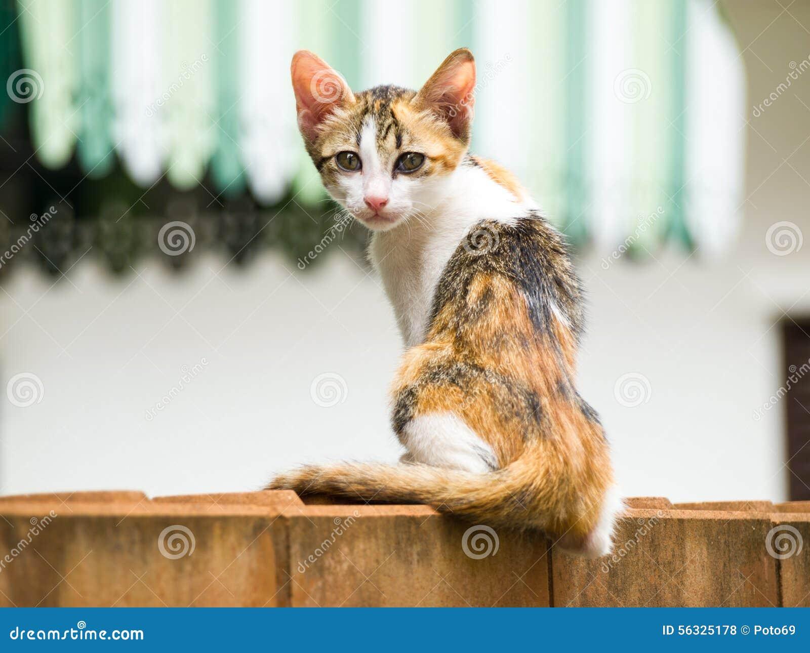 Le chat maigre se reposent sur un mur de briques