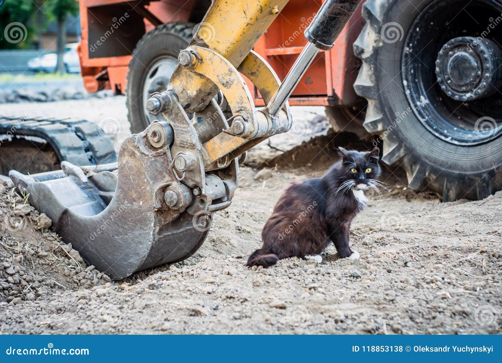 Le chat noir, affamé, sans abri lave sous le seau d une excavatrice