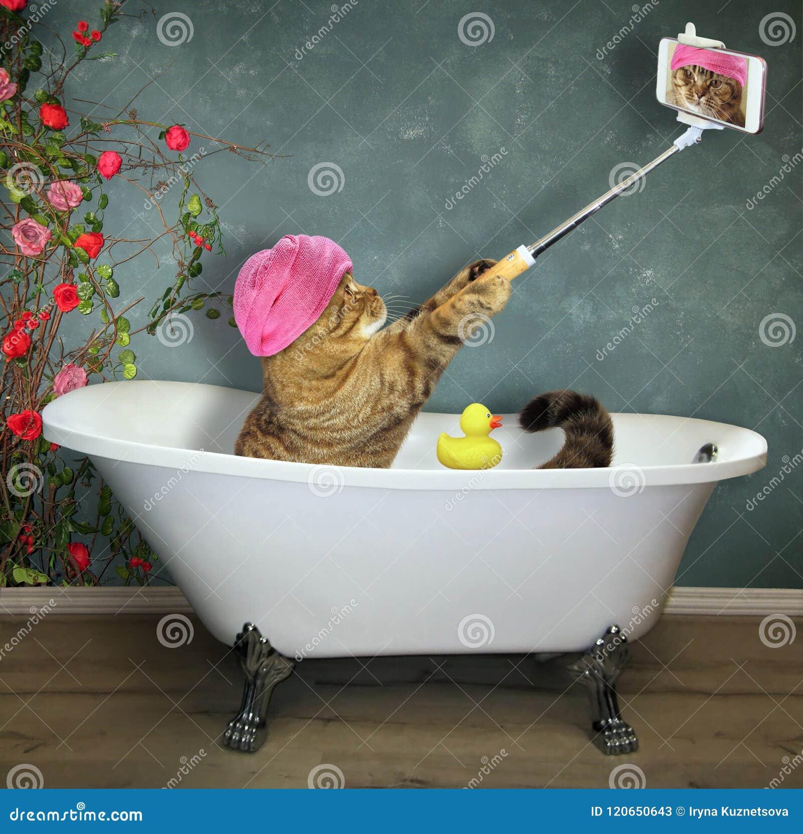 Le chat prend un bain