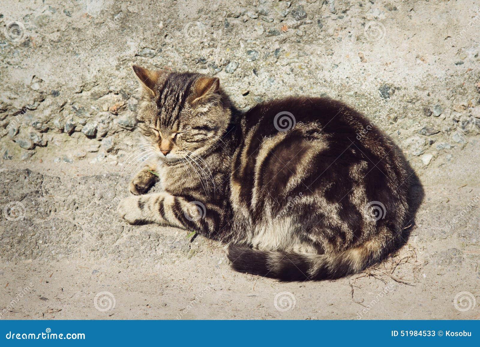 Le chat rayé gris paresseux dort dehors