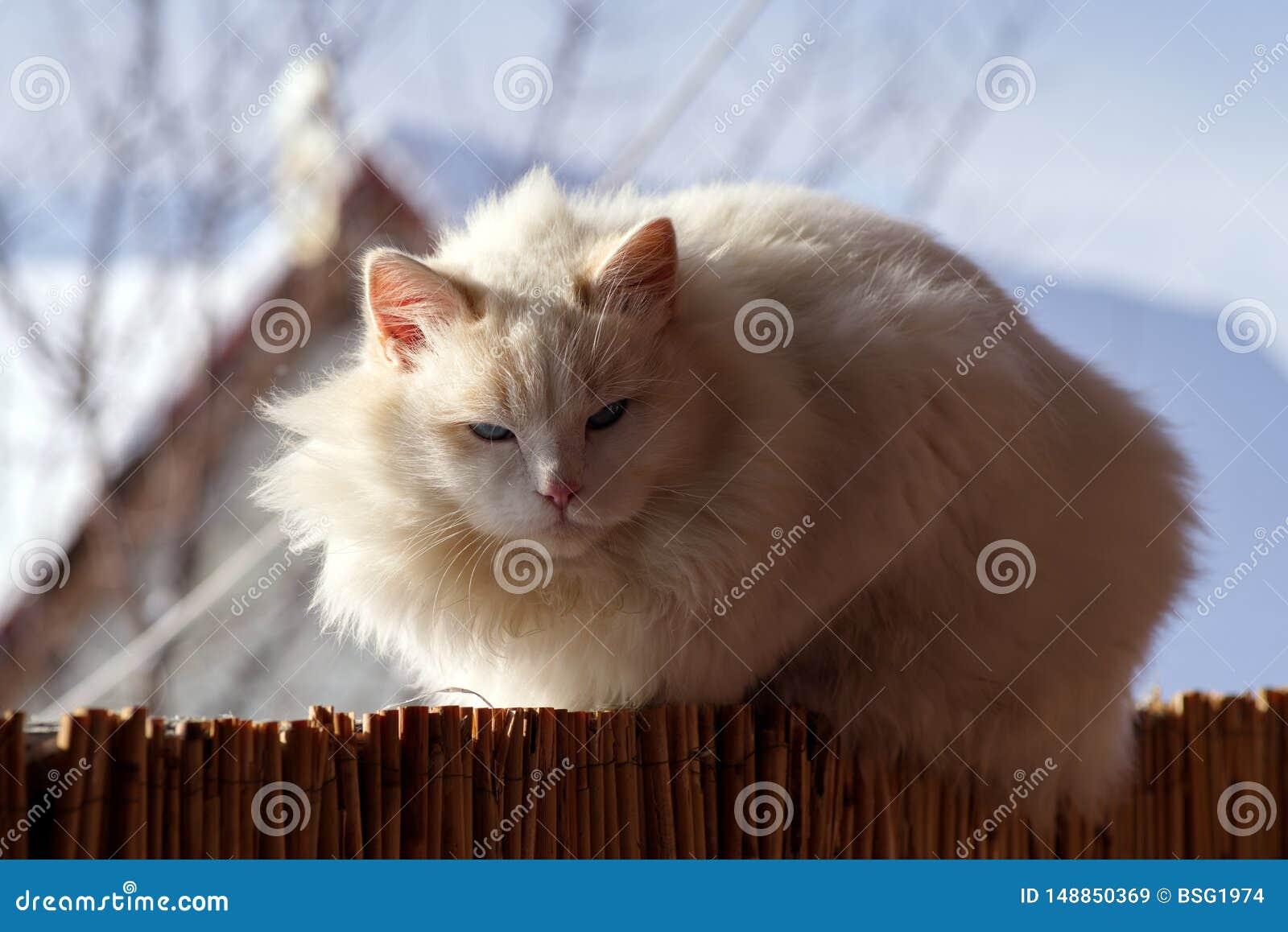 Le chat se dore pendant l hiver au soleil