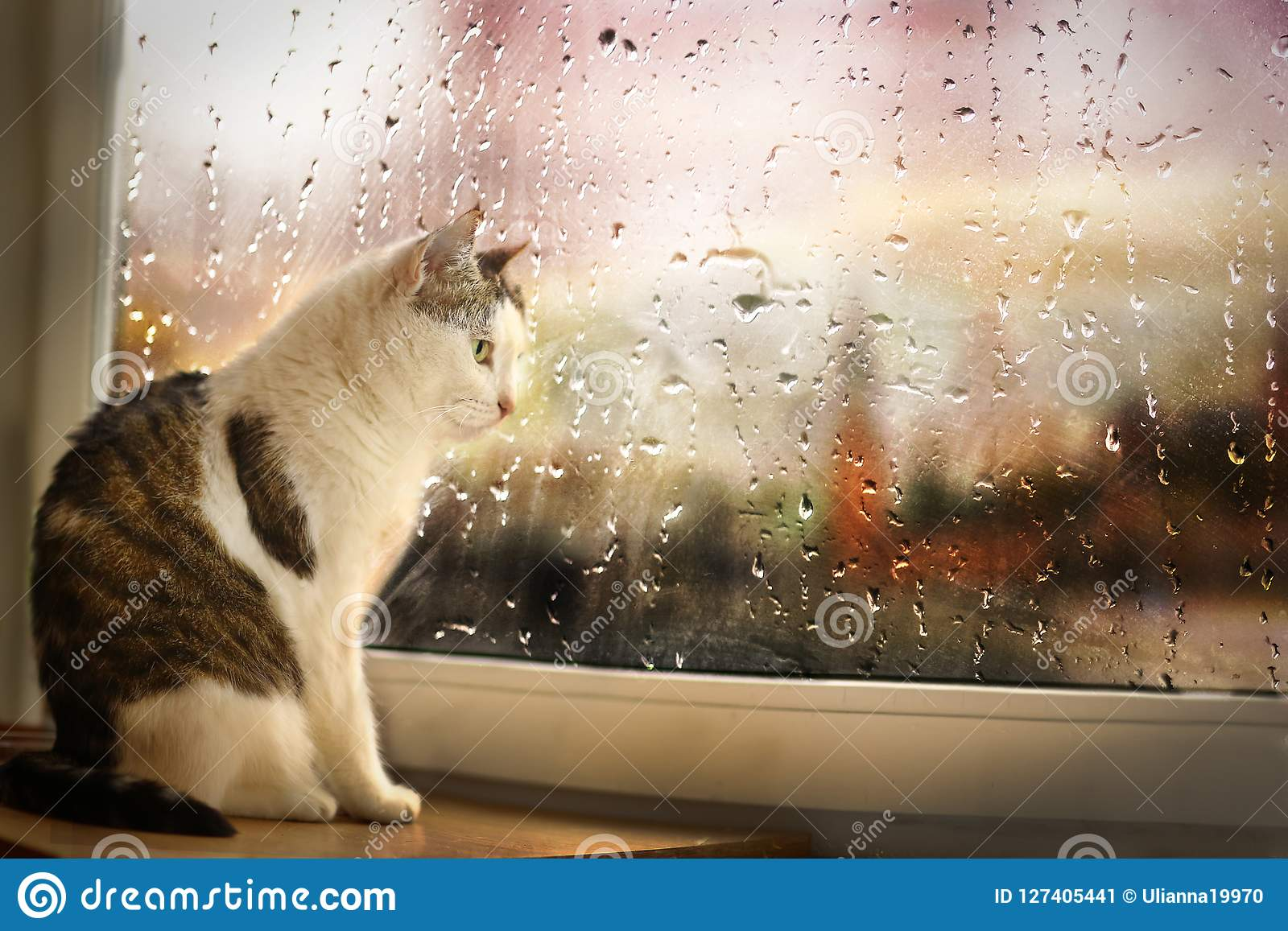Le chat se reposent sur la rue pluvieuse de montre de rebord de fenêtre bien que la fenêtre couverte de pluie se laisse tomber