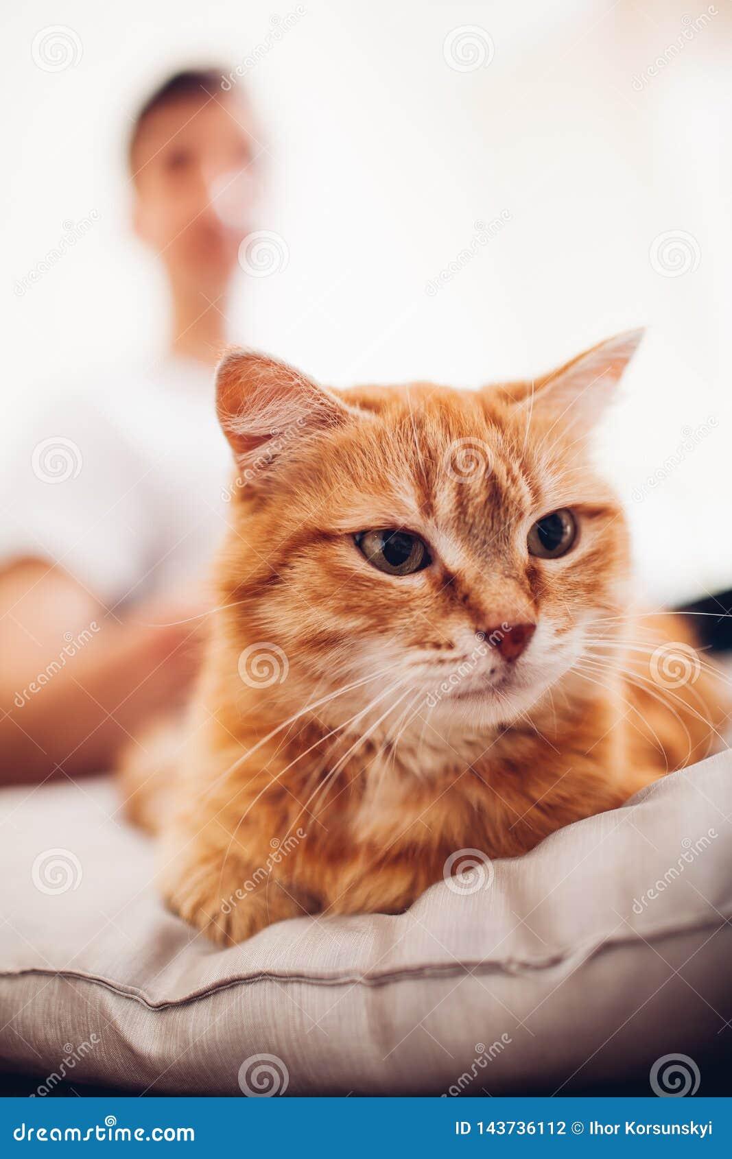 Le chat se trouve sur un oreiller ? la maison pr?s de son ma?tre