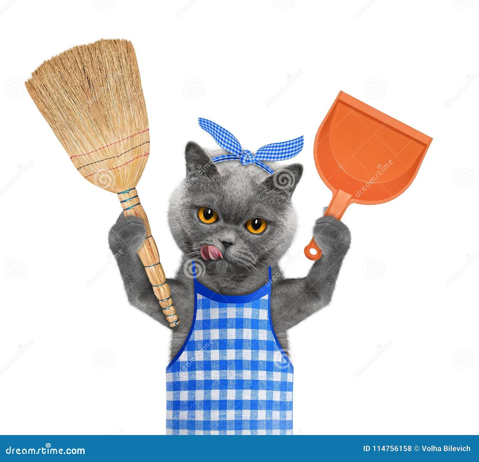 """Résultat de recherche d'images pour """"chat et le balai"""""""