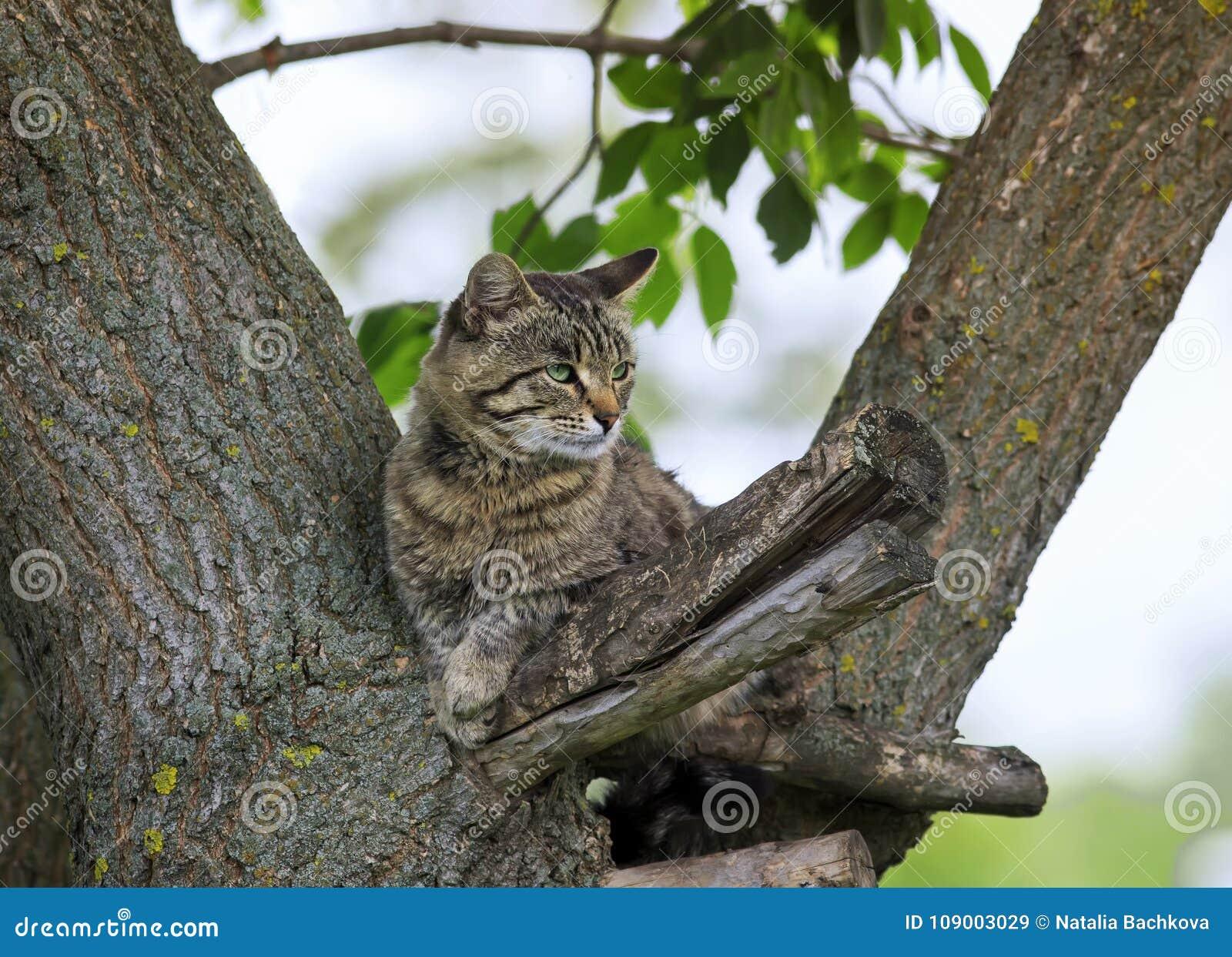 Le chat tigré imposant s est étendu sur un parc d arbre au printemps