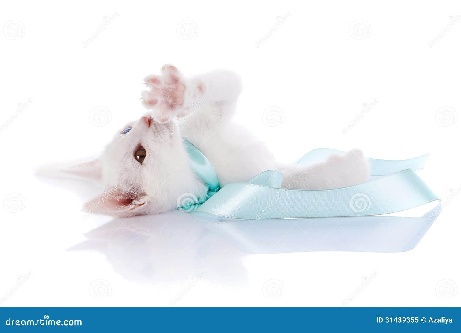 Le chaton blanc avec les yeux multicolores se trouve sur un fond blanc image stock image du - Enlever les puces sur un chaton ...