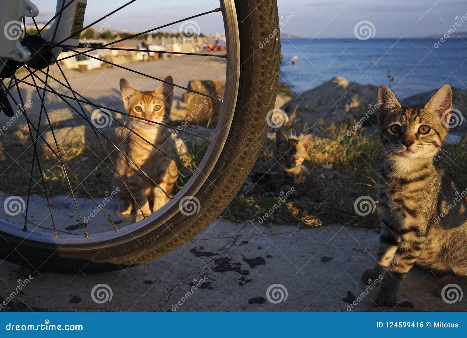 Le chaton de gingembre se cache