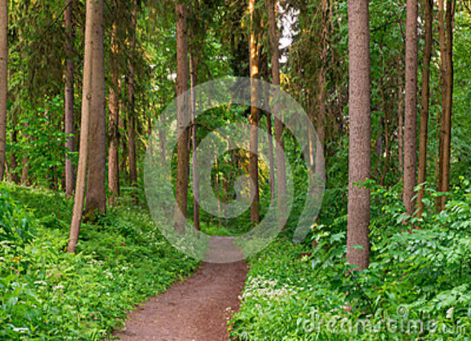 Le chemin de terre entre profondément dans la forêt