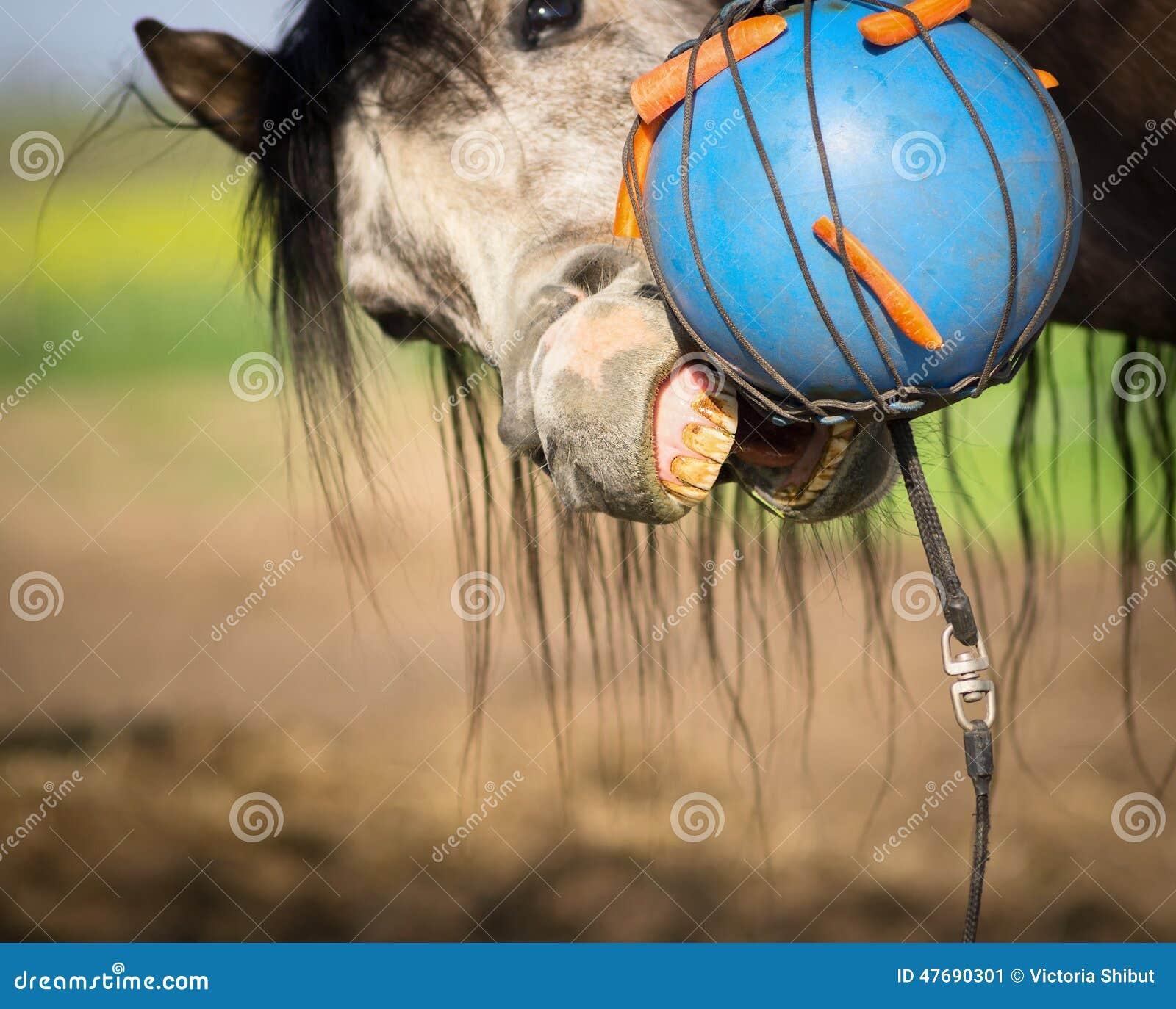 Carotte Bleue dedans le cheval mord la boule bleue avec la carotte image stock - image du