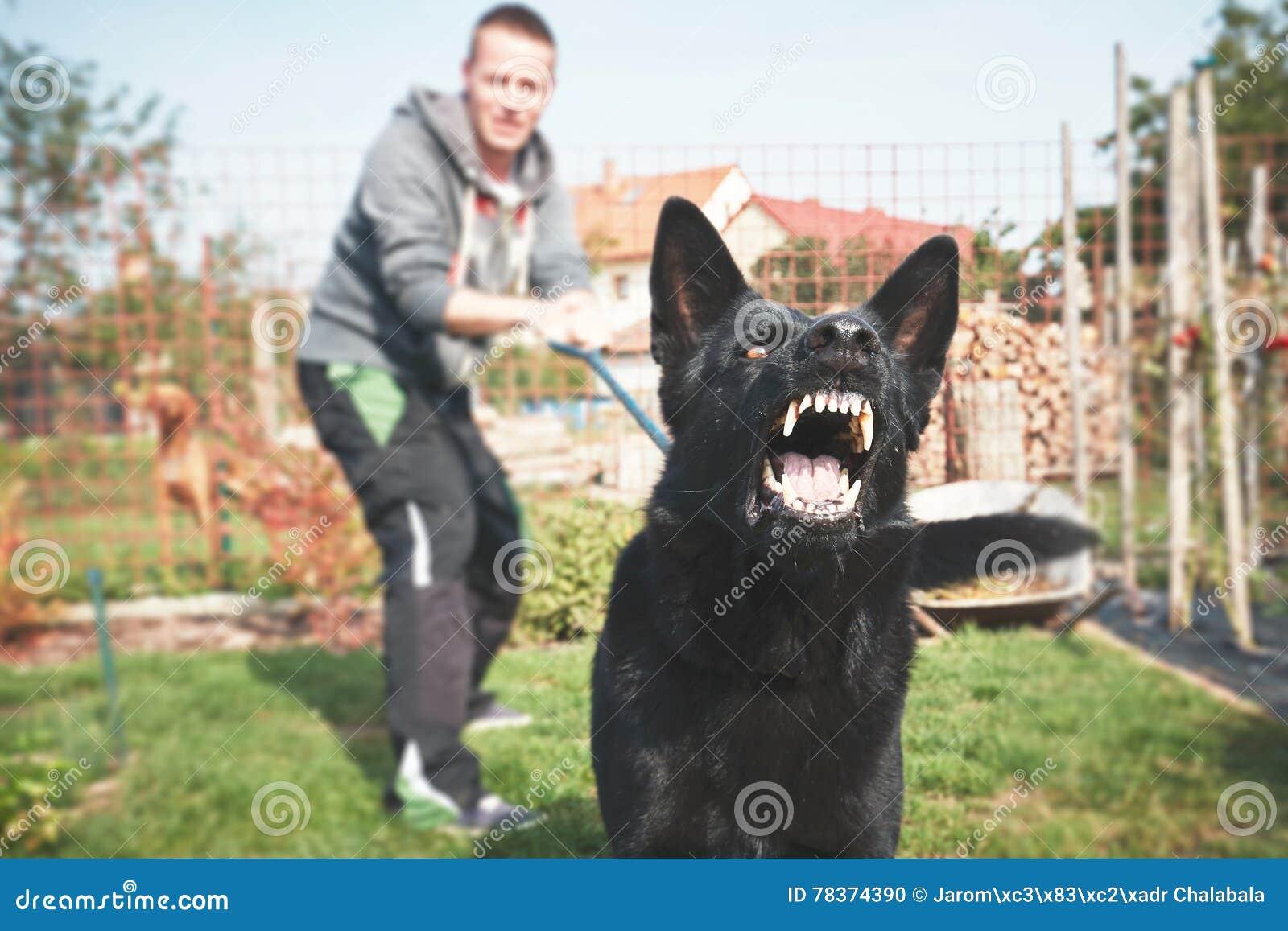Le chien agressif aboie