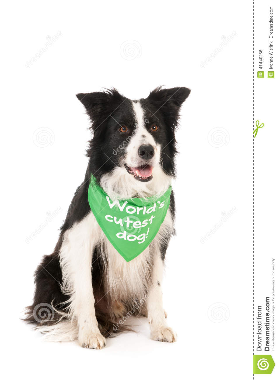 le chien le plus mignon du monde de border collie photo stock image du mignon monde 41440256. Black Bedroom Furniture Sets. Home Design Ideas