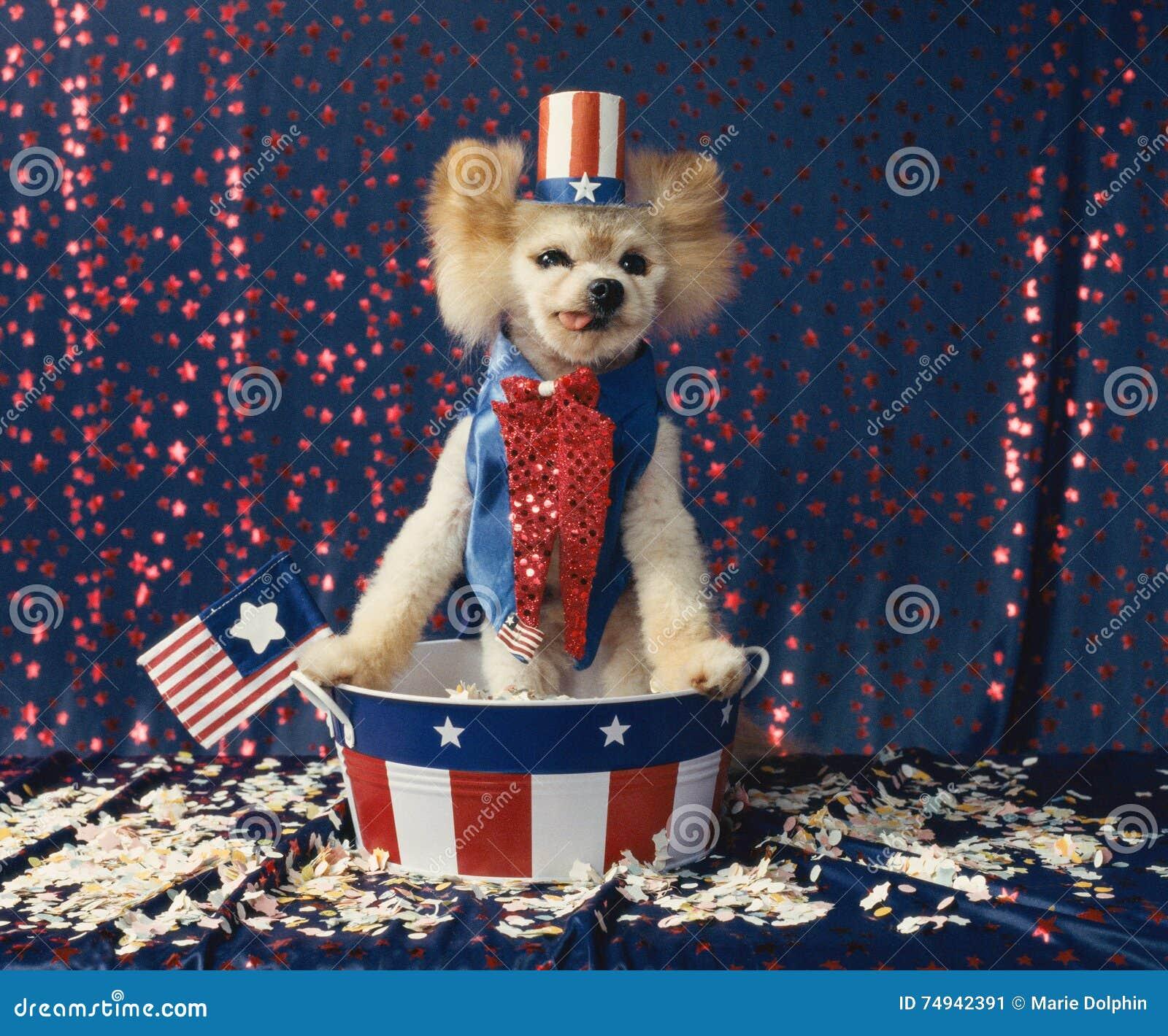 Le chien patriotique américain d Oncle Sam donne la position de la parole d élection
