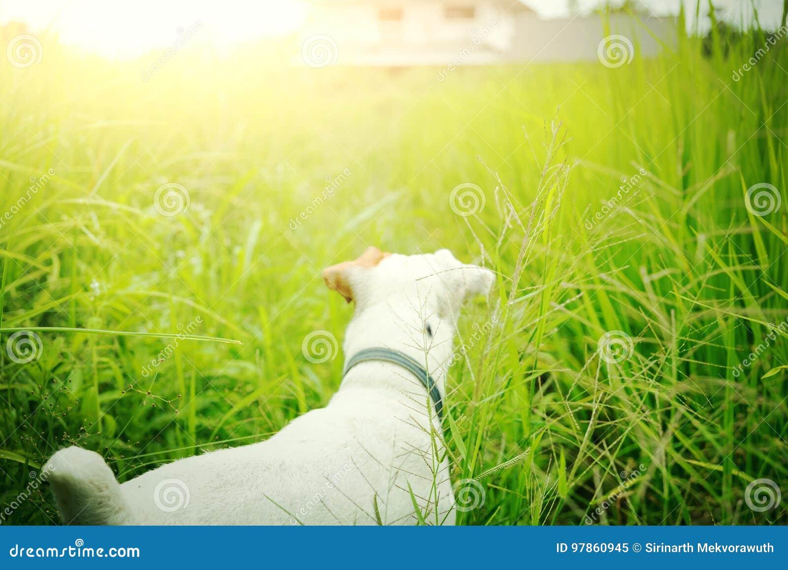 Le chien perdu trouvent sa maison Animal familier et animal