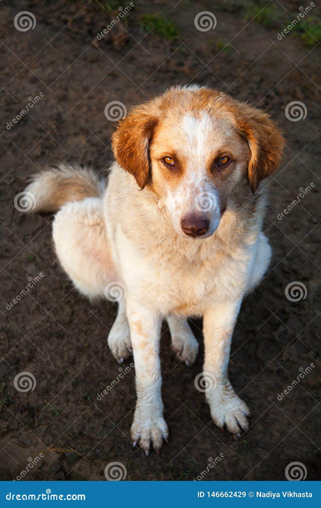Le chien seul veut être des amis