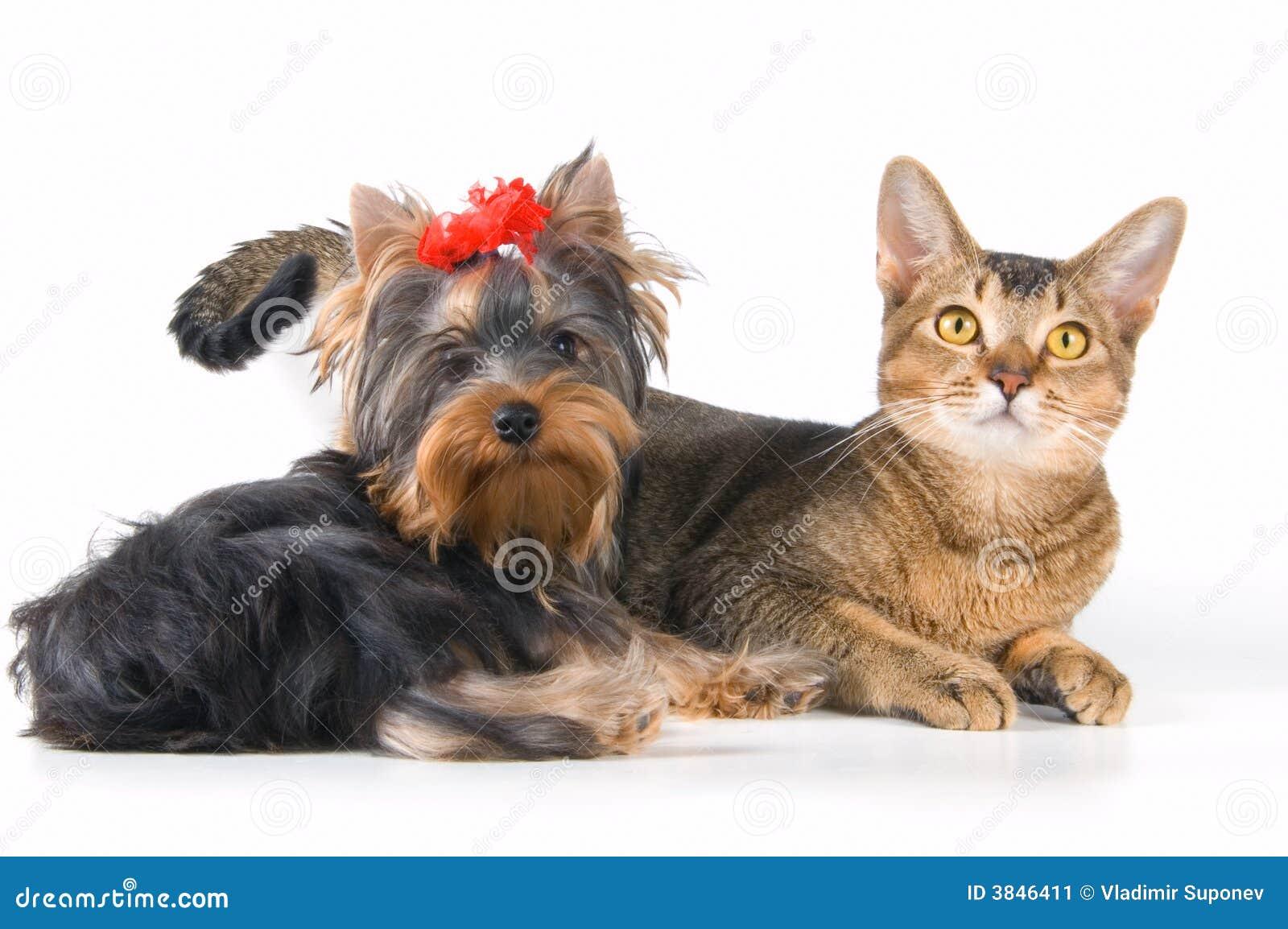 Le chiot et le chaton