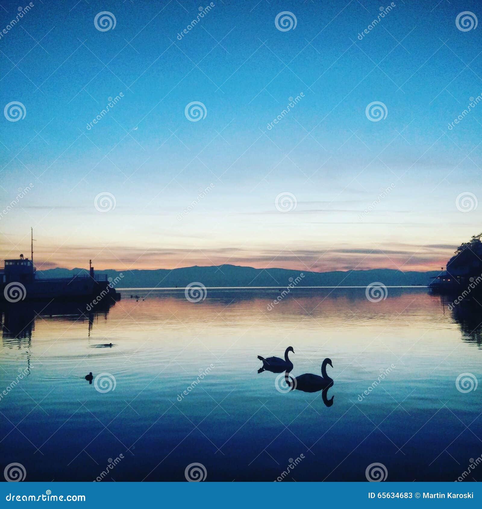 Le ciel bleu de lac d amour de cygne affermissent clairement