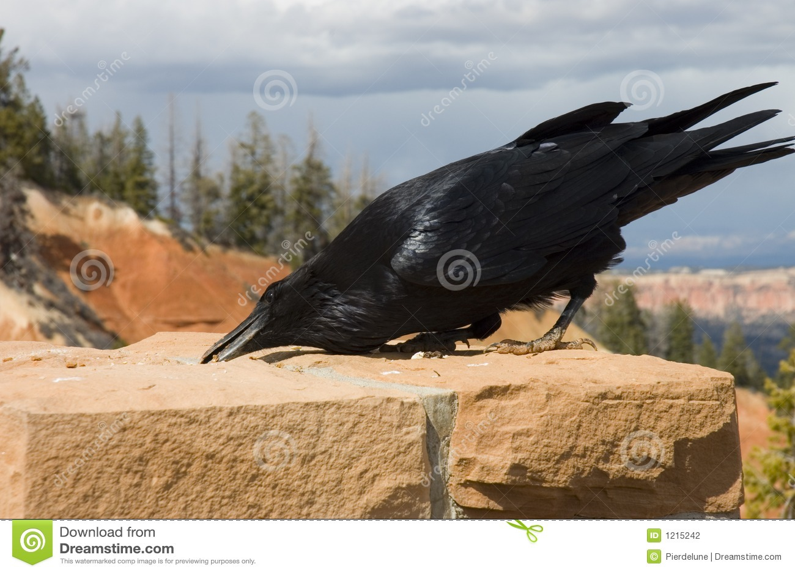 Le corbeau affamé