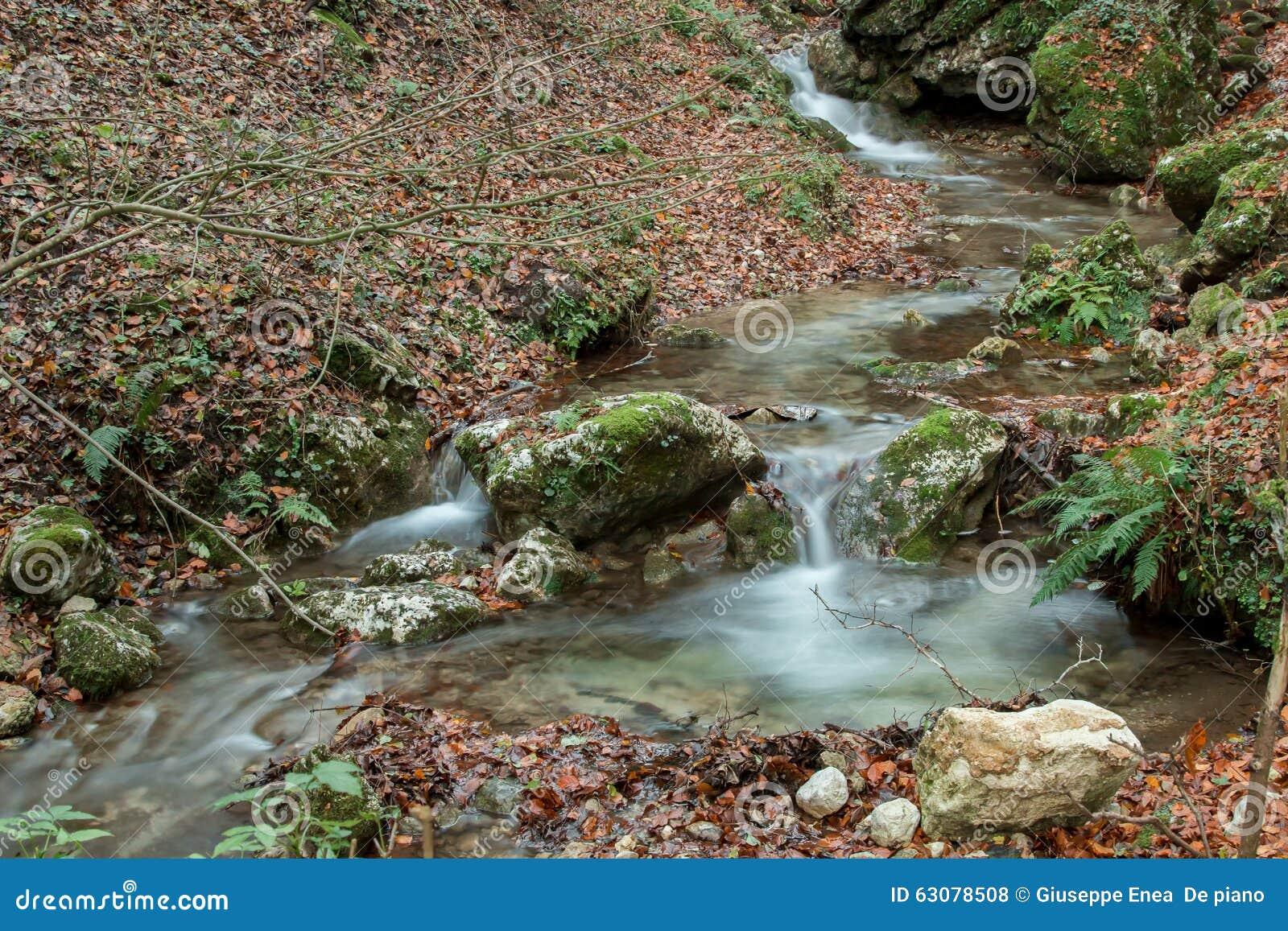 Download Le Courant était Parmi Les Feuilles Photo stock - Image du saisons, soyeux: 63078508