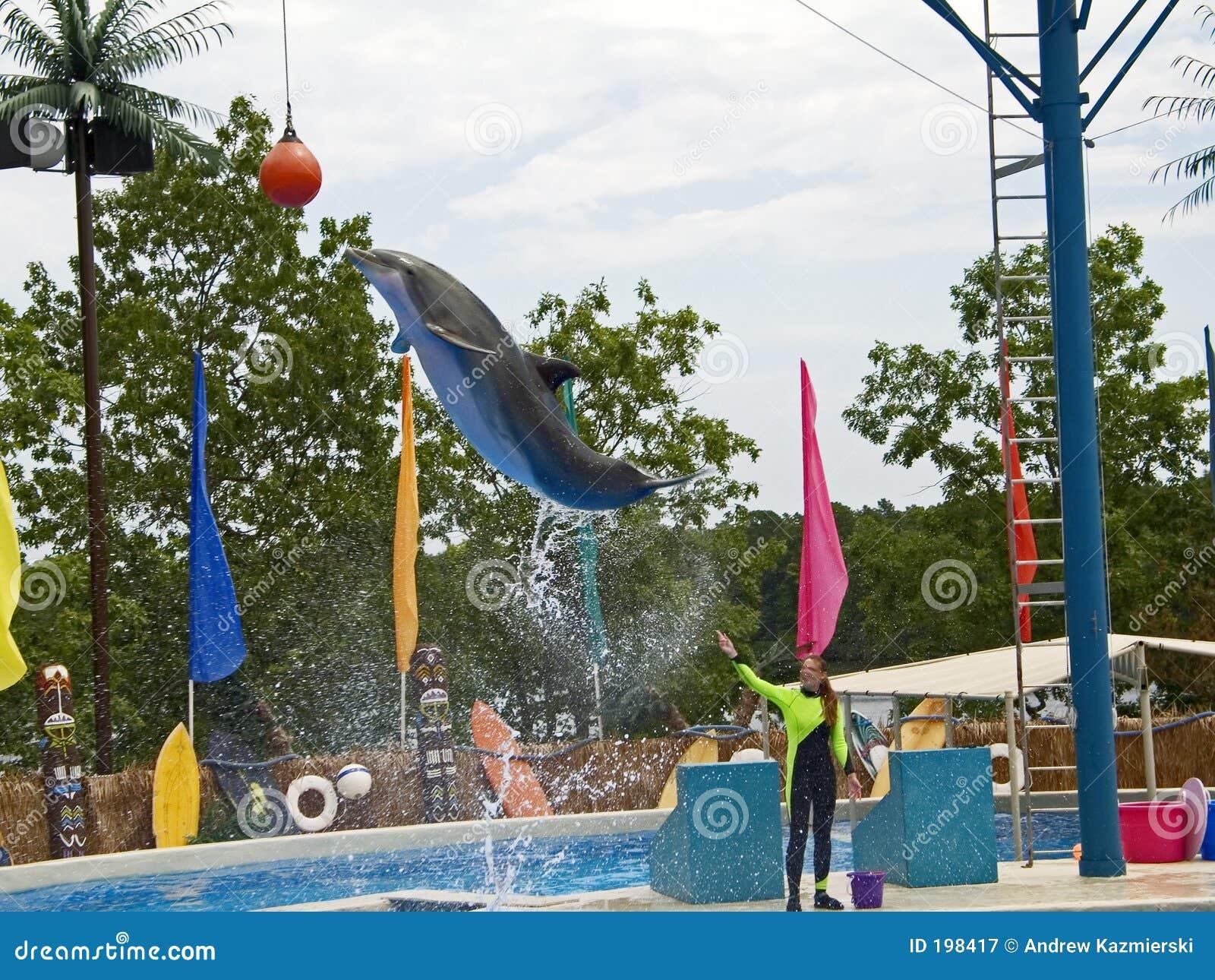 Le dauphin sautent