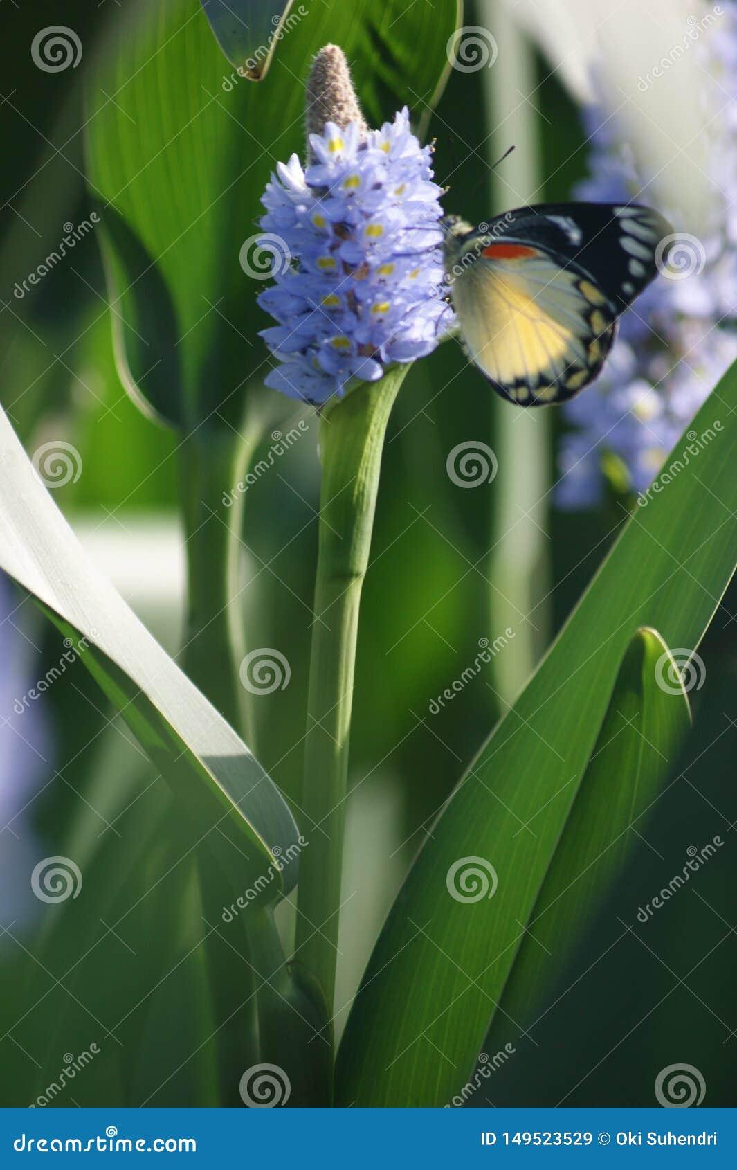 Le farfalle scendono sui fiori nel corso della mattinata