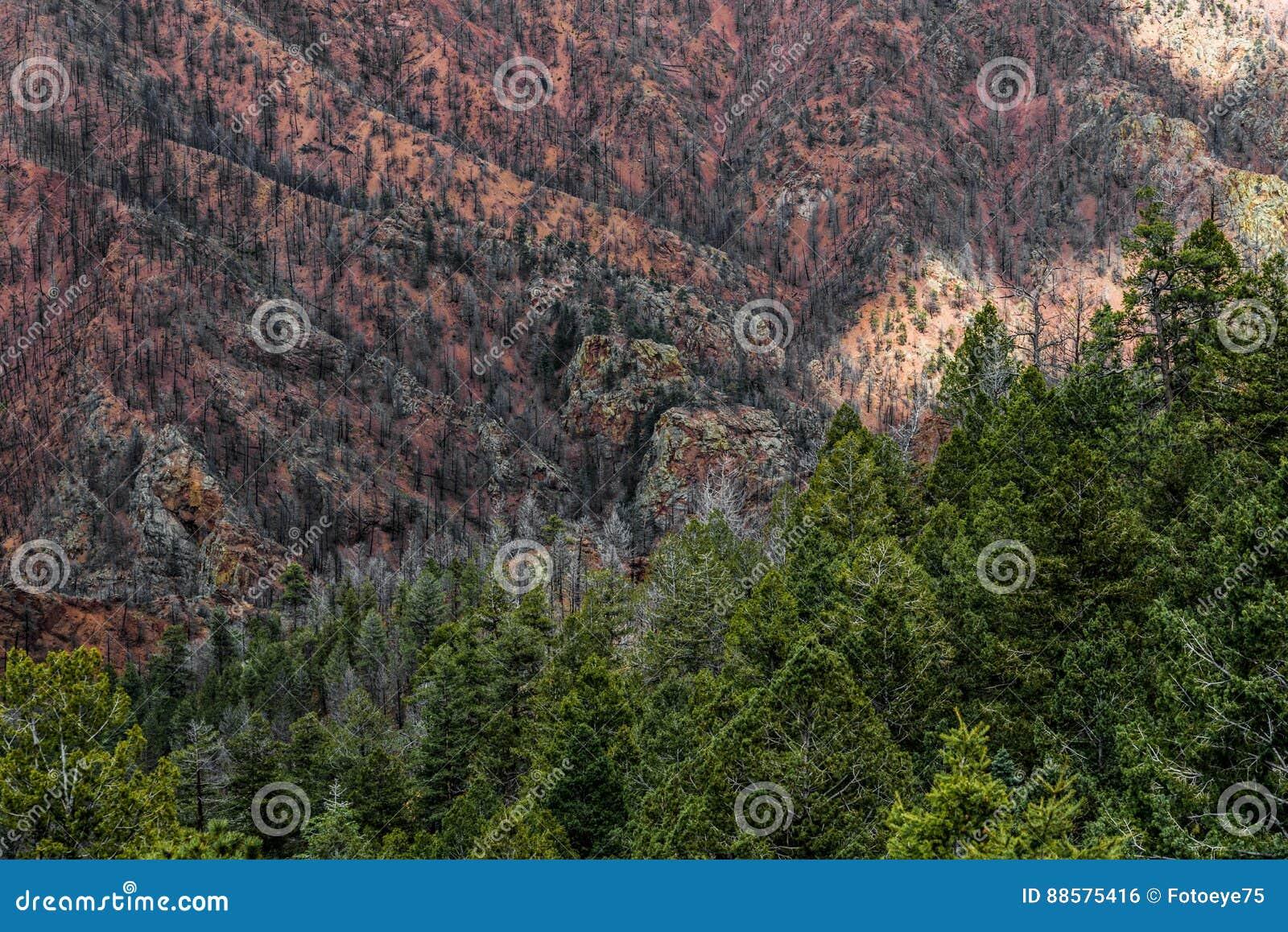 Le feu Colorado Springs de canyon de Waldo