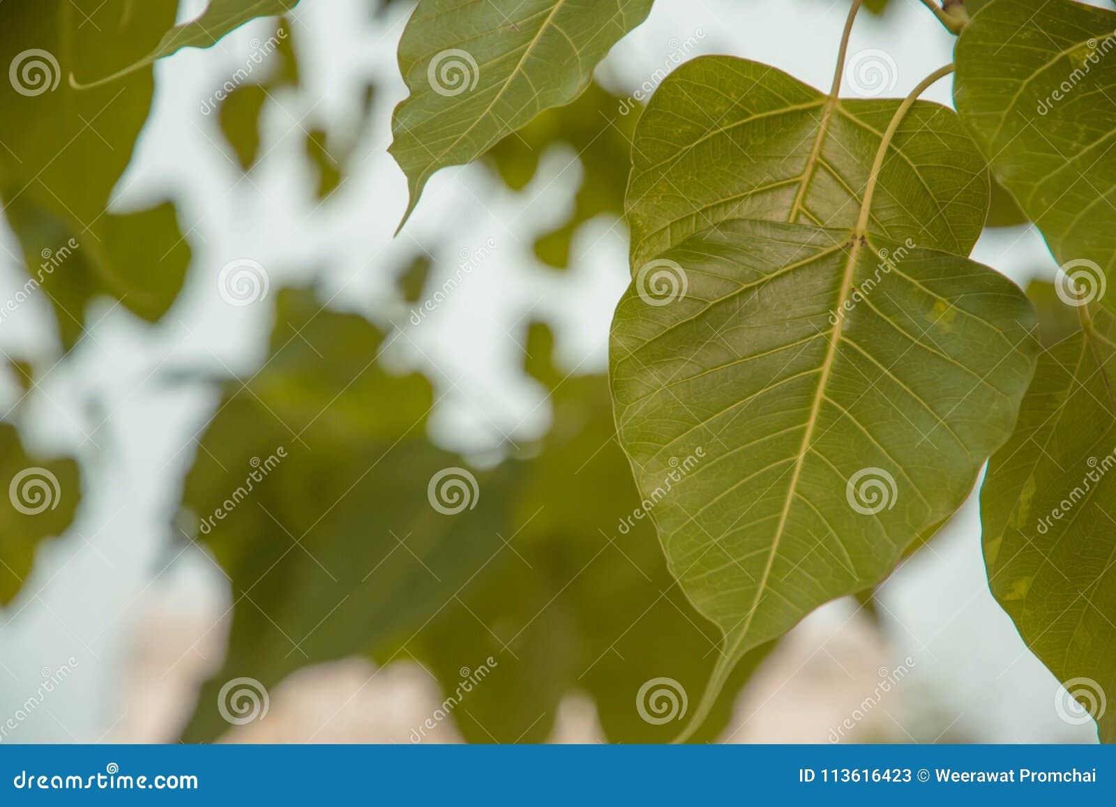Le foglie verdi hanno offuscato il fondo