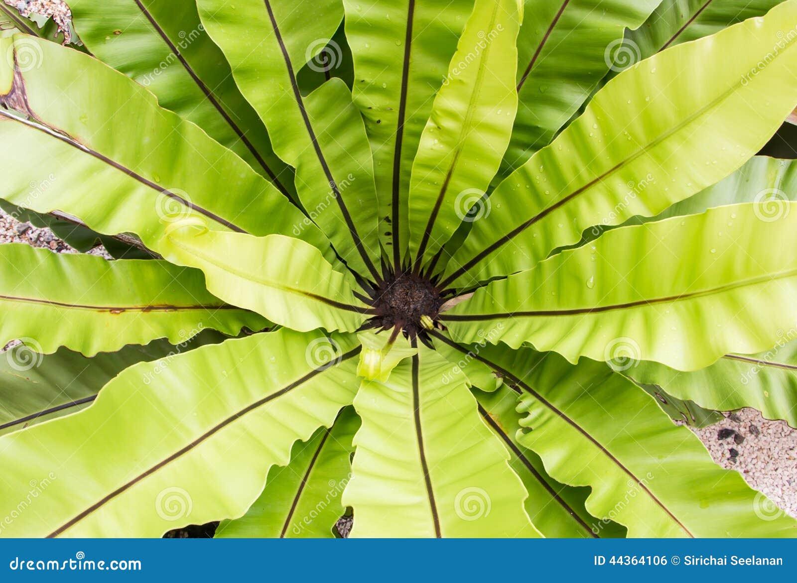 Le foglie verdi strutturano o fondo