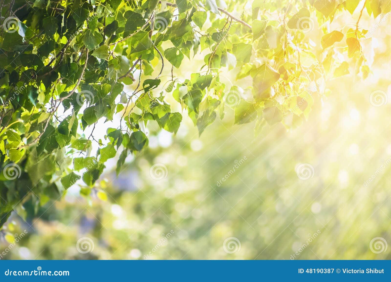 Le fond d été de ressort de nature avec le vert part de la branche