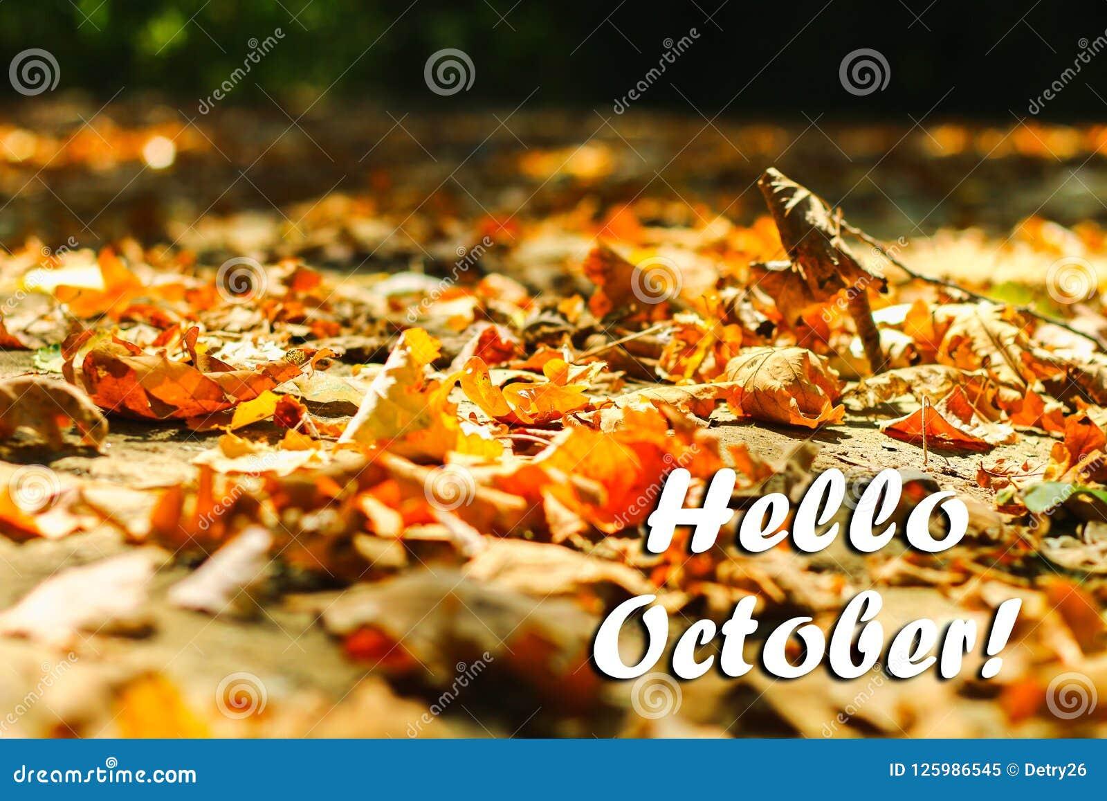 Le fond des feuilles d automne de feuilles d automne en parc sur terre, jaune, vert part dans le parc d automne bonjour octobre