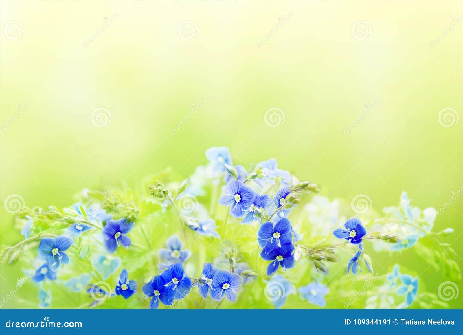 Le fond floral de ressort tendre avec Veronica Germander bleue, véronique fleurit Un bouquet de pré ou de forêt sauvage fleurit s