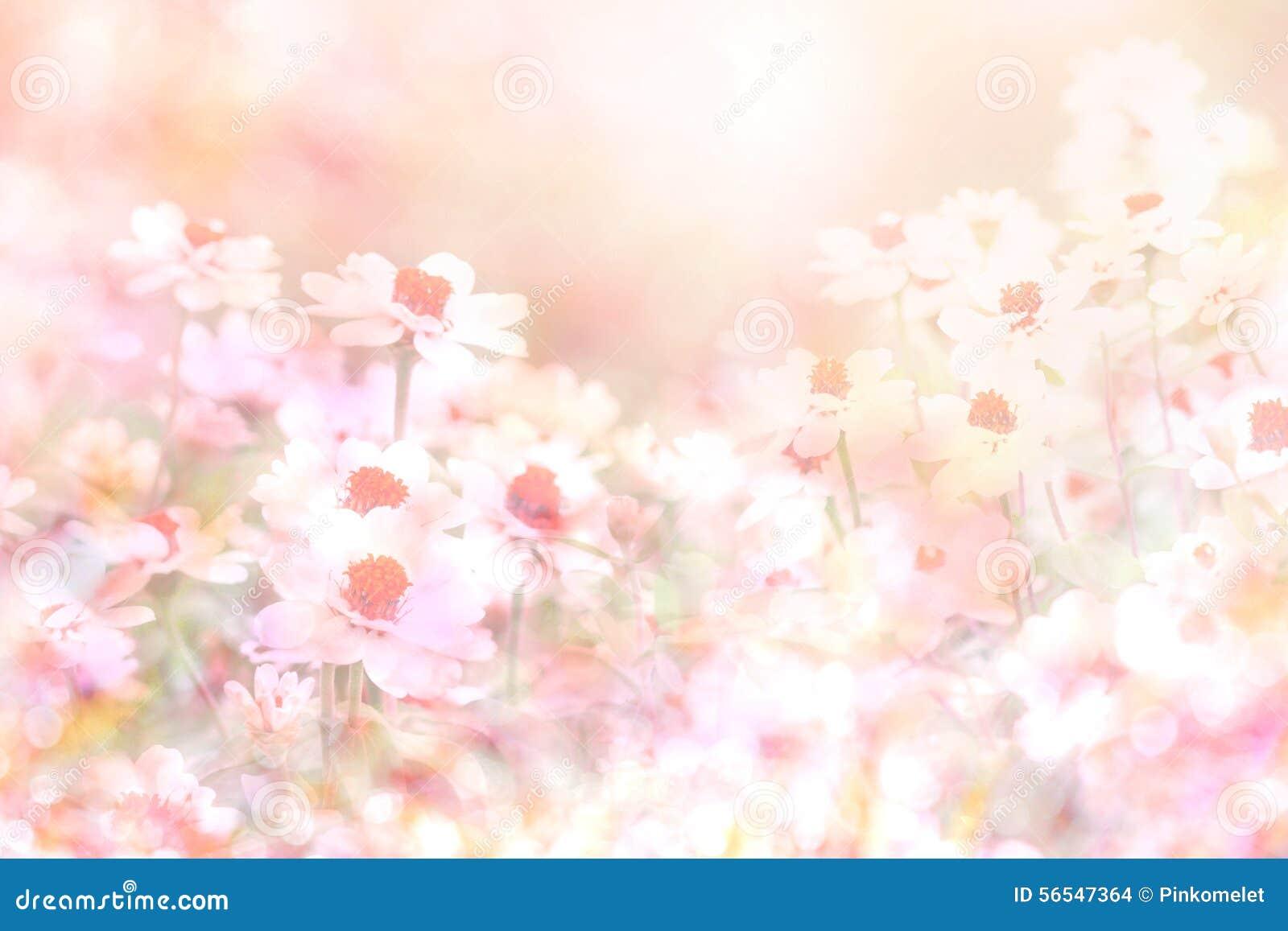 Le fond rose doux mou abstrait de fleur de la marguerite fleurit
