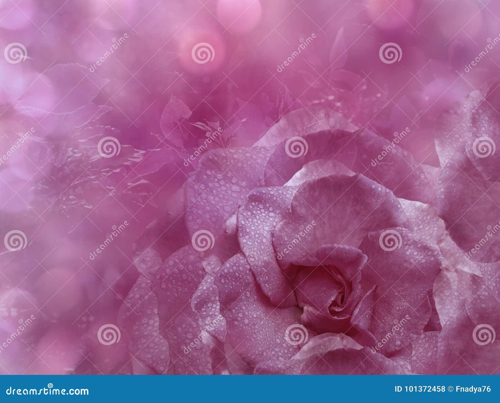 Le Fond Rose Floral De A Monte Fleurit La Composition Une Fleur D