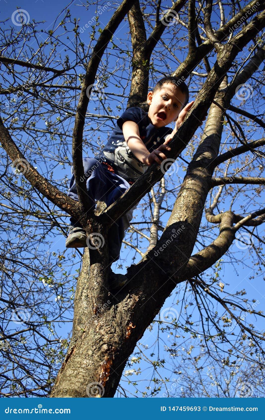 Le garçon 4 an sur l arbre a le problème à descendre de l arbre