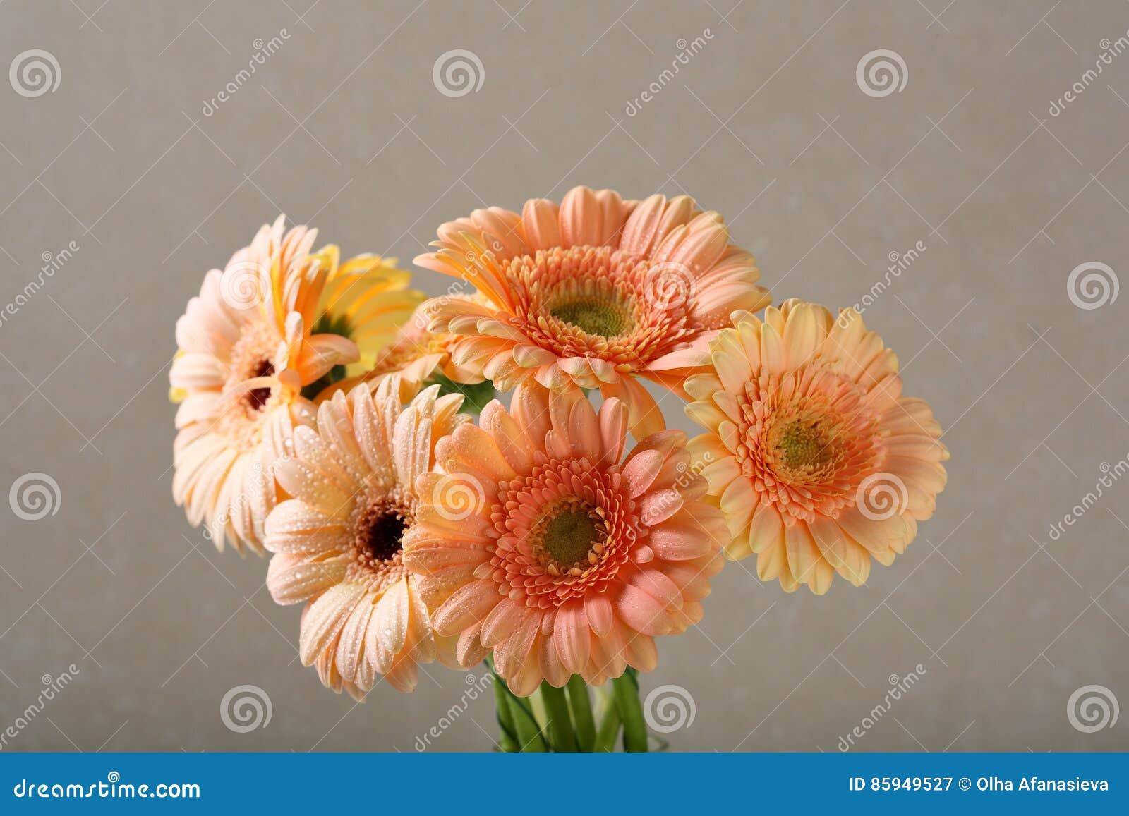 Le Gerbera fleurit le bouquet