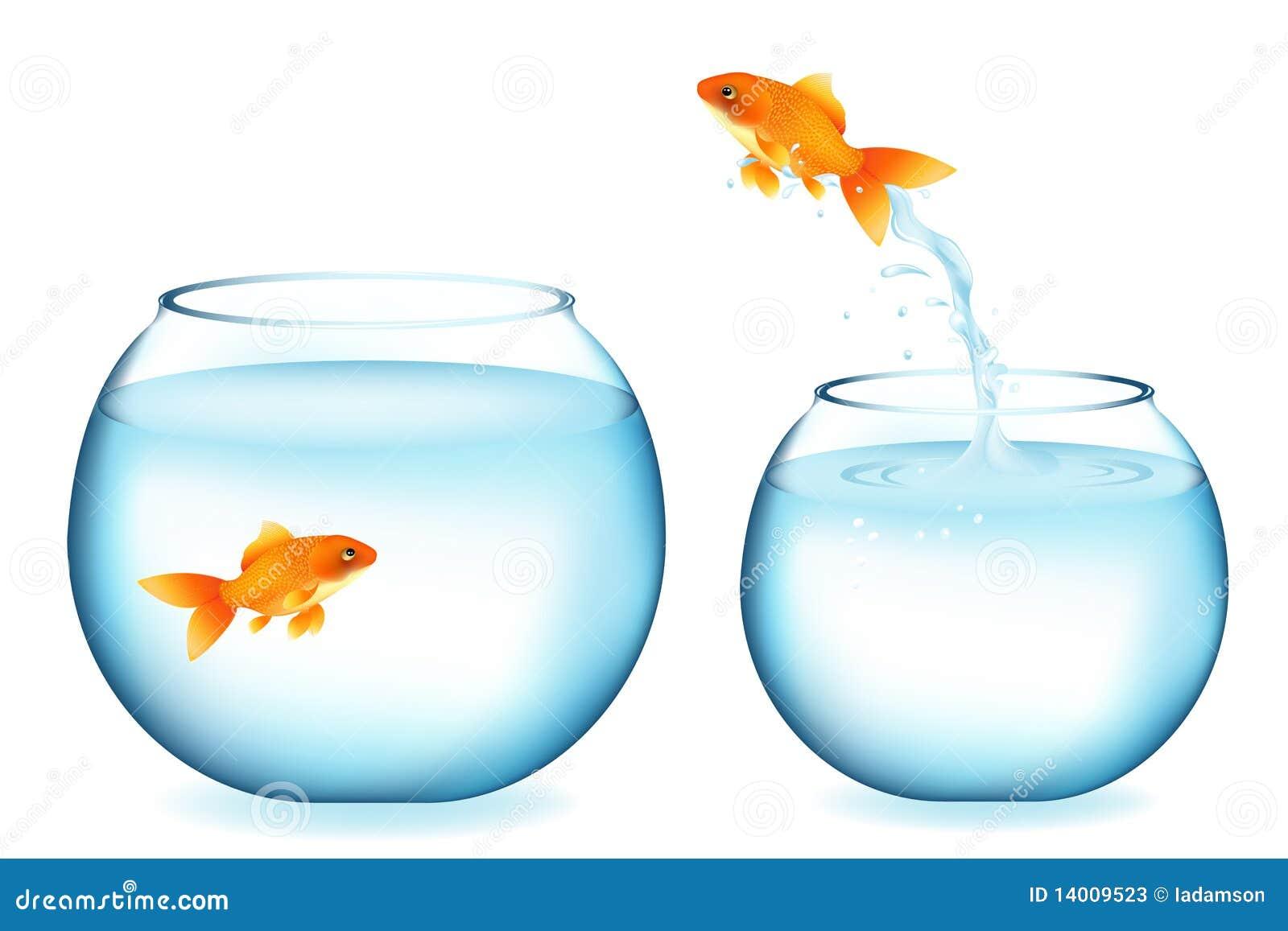 Le Goldfish sautant à l autre Goldfish. Vecteur