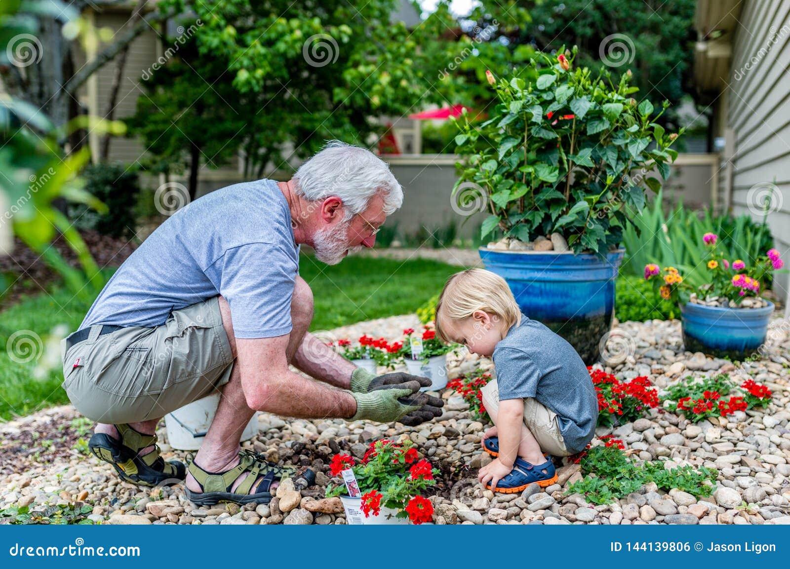 Le grand-père et le petit-fils passent le temps plantant ensemble des fleurs dans le jardin