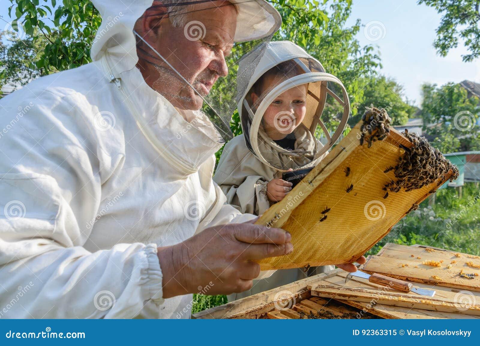 Le grand-père expérimenté d apiculteur enseigne son petit-fils s inquiétant des abeilles Apiculture Le concept du transfert de