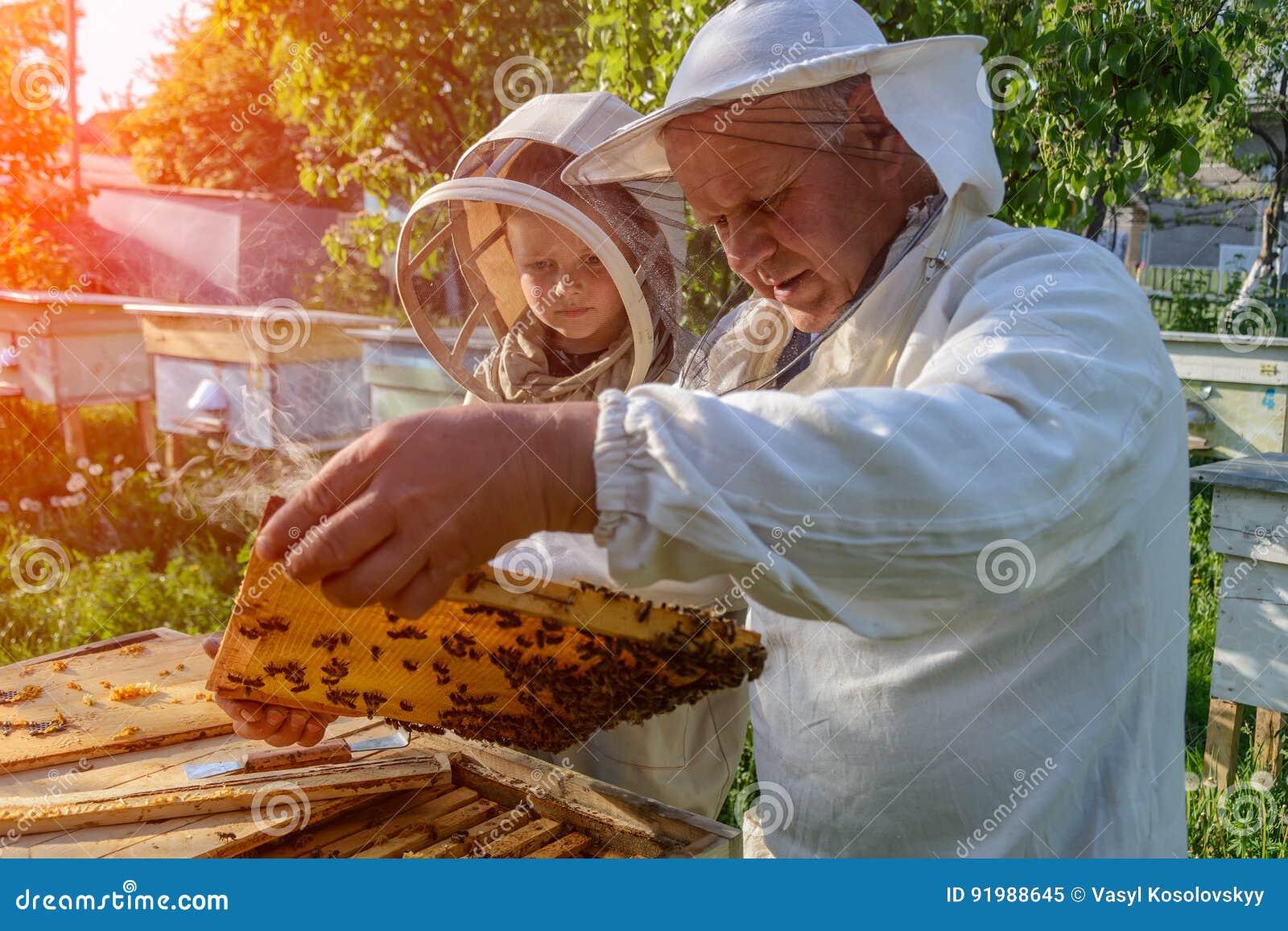 Le grand-père expérimenté d apiculteur enseigne son petit-fils s inquiétant des abeilles Apiculture Le transfert de l expérience
