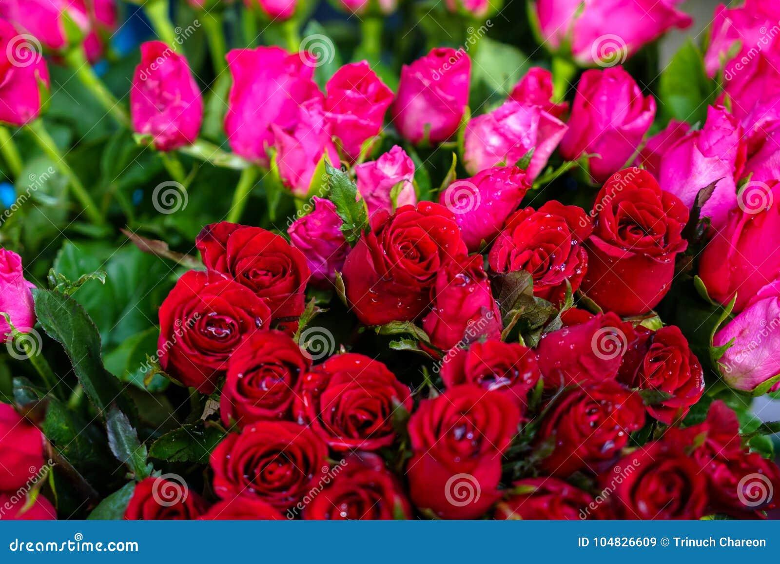 Le Groupe De Belle Fleur Rouge Et Rose Lumineuse Fraiche De Rose De