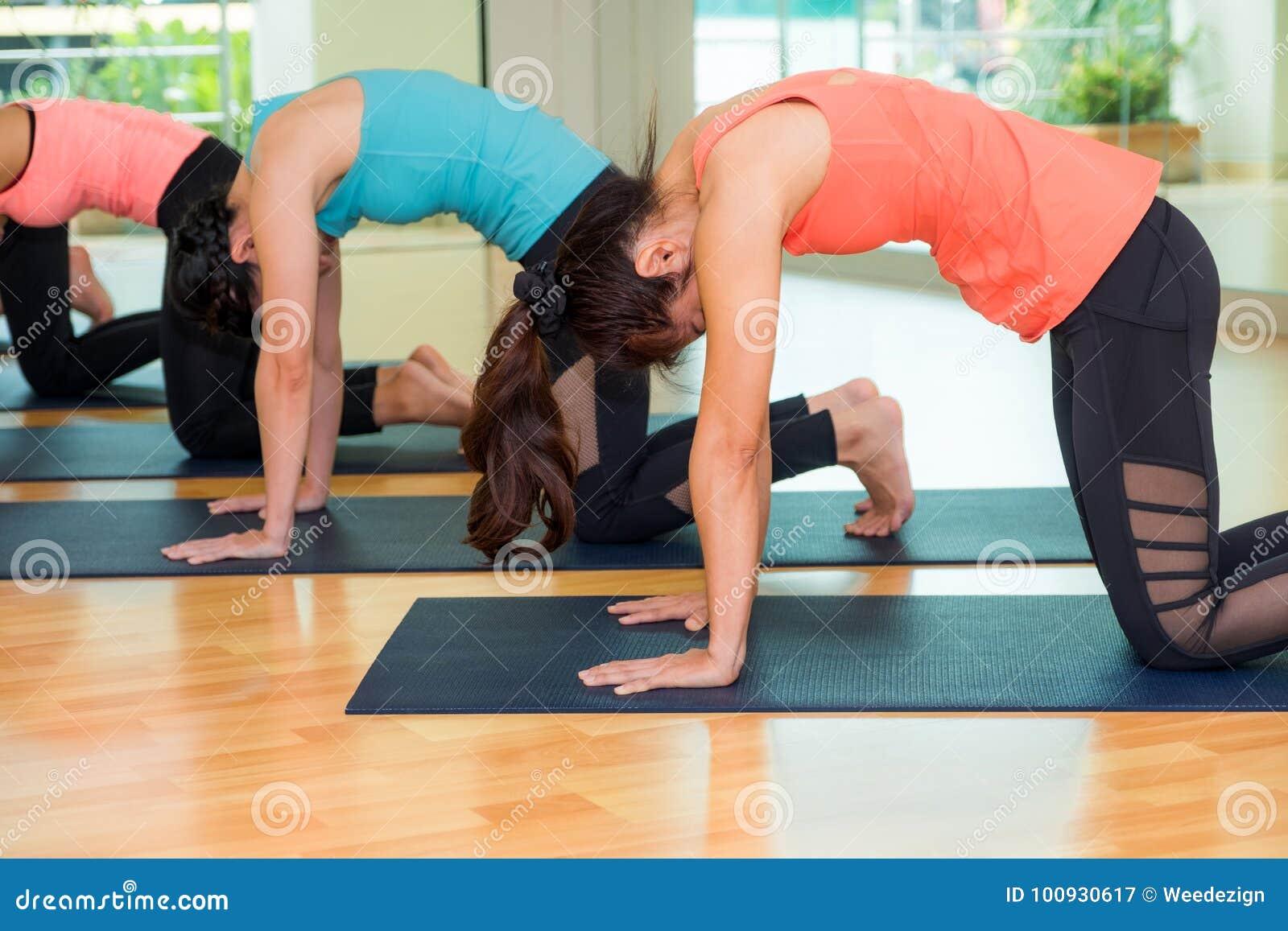 Le groupe de personnes faisant le chat de yoga pose dans la pièce de formation de studio, BAL