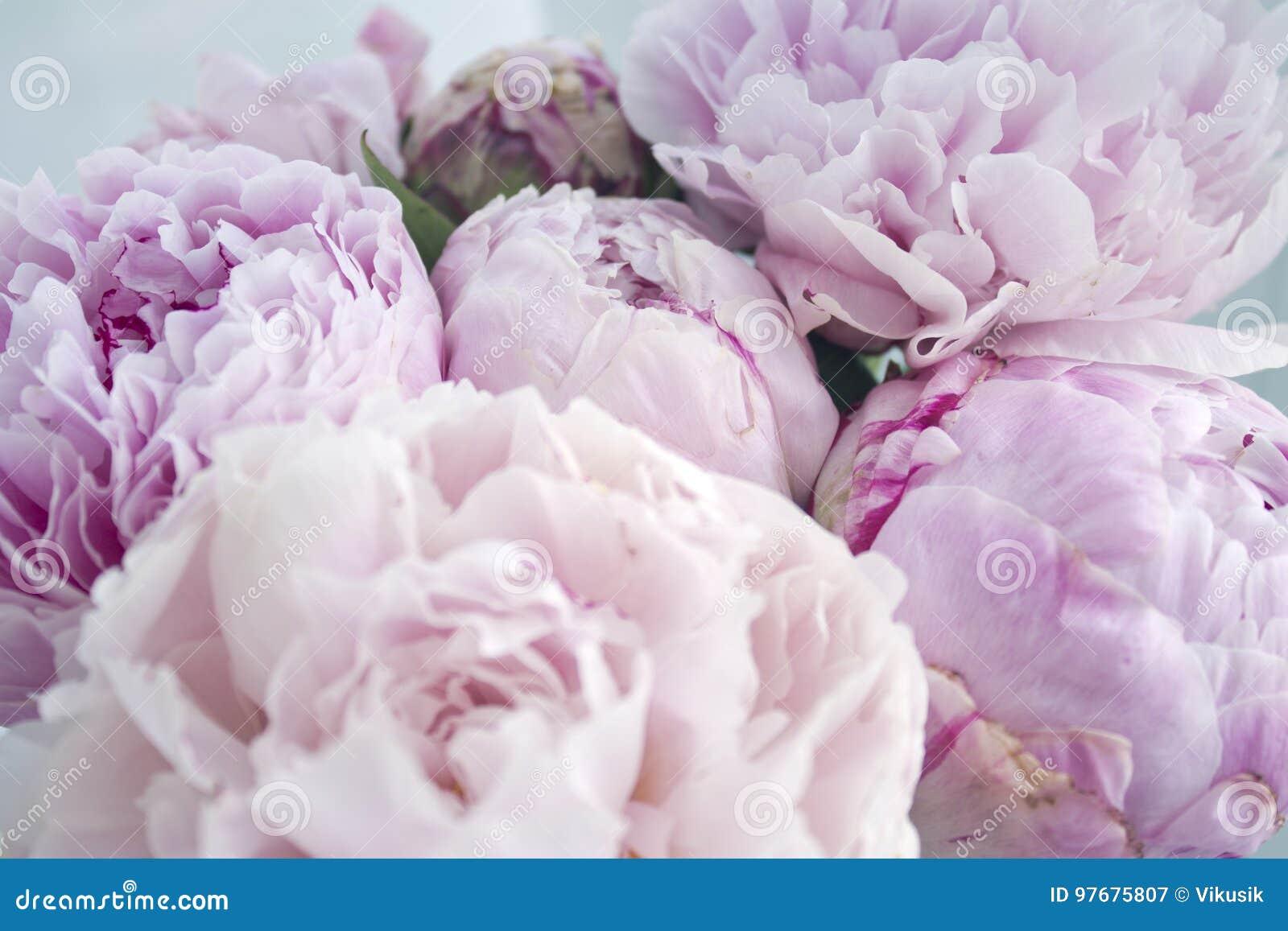 Le groupe frais de plan rapproché de pivoines roses, pivoine fleurit Carte, pour épouser