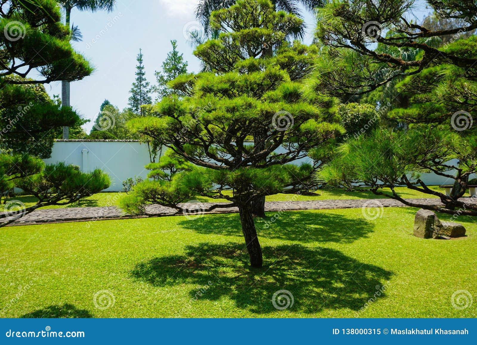 Le Japon Très Propre Ou Un Jardin Japonais De Parc Avec Le Petit Et Grand  Arbre