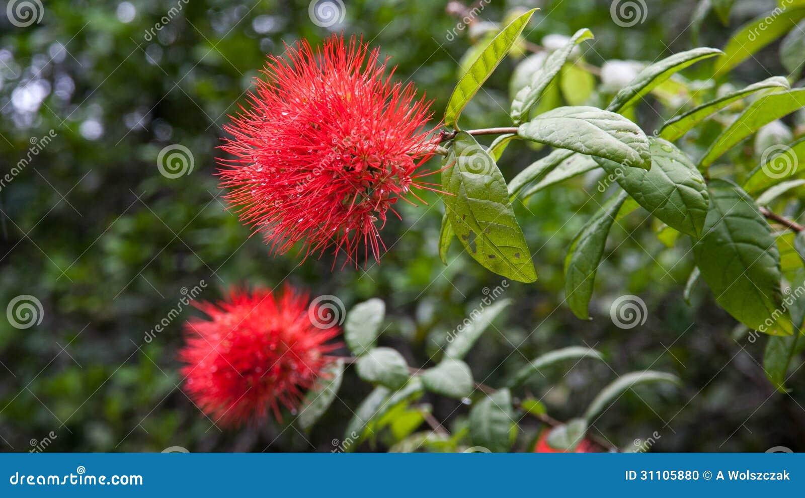 Le jardin du roi spice garden seychelles stock photo for A la verticale du jardin grenoble