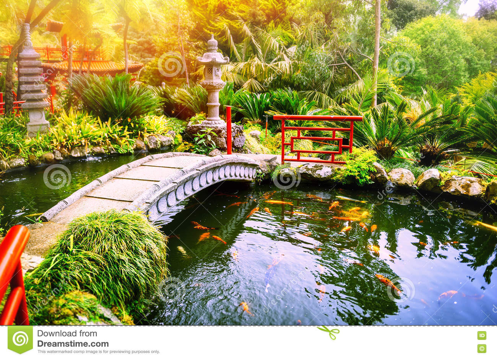 Le jardin japonais avec le koi de natation p che dans l for Koi japonais prix