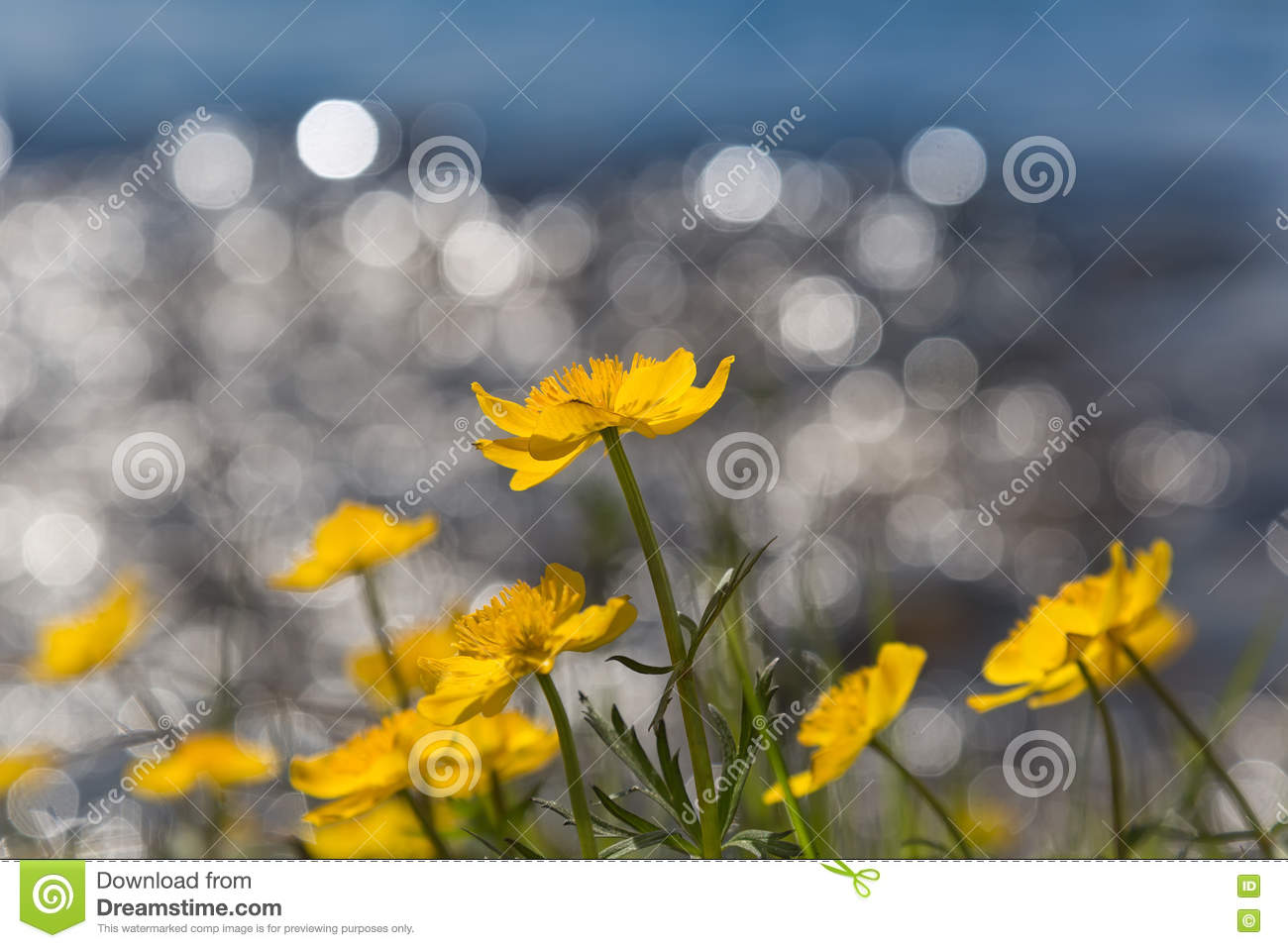 Download Le Jaune Fleurit Le Bokeh De Wiith Photo stock - Image du fond, coloré: 76087442