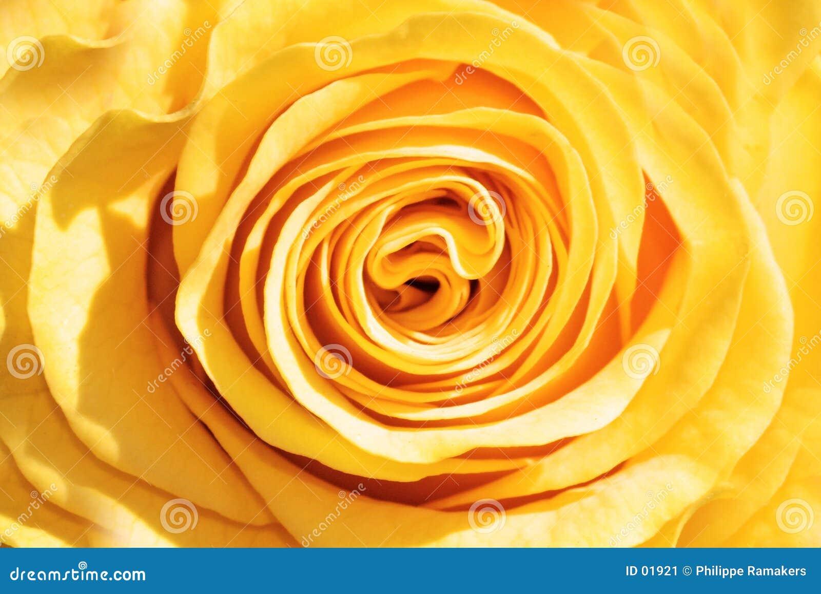 Le jaune a monté